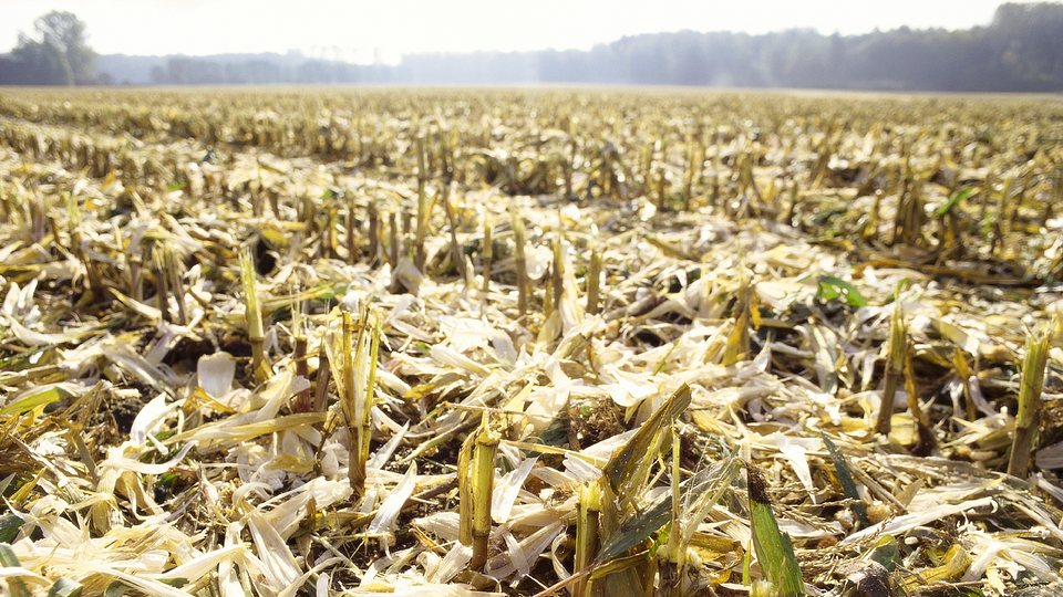 Haftungsrisiken in der Landwirtschaft
