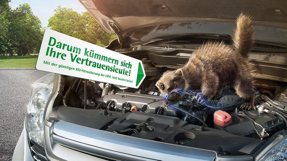 Kfz-Versicherung: Marderschaden